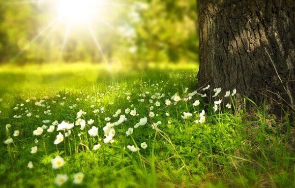 人生を豊かにする光