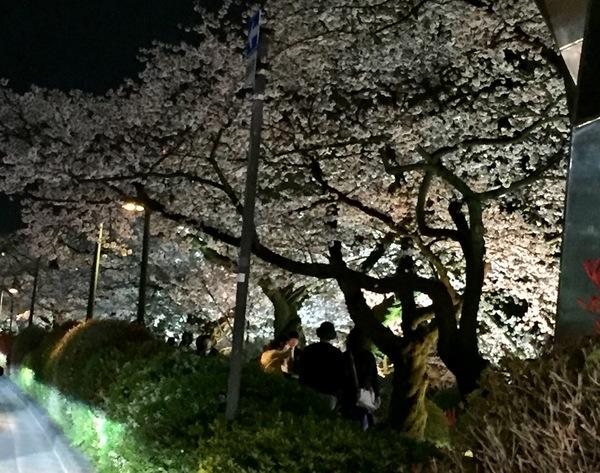 桜と新月パワー☆